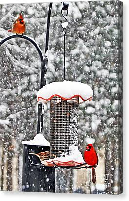 A Cardinal Winter Canvas Print by Lydia Holly