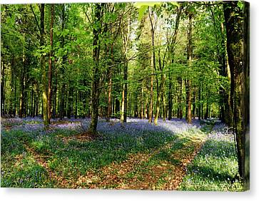 Canvas Print featuring the photograph A Carpet Of Colour by Wendy Wilton