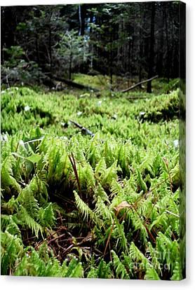 A Carpet Of Moss  Canvas Print by Steven Valkenberg