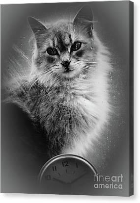 Van Goghs Ear Canvas Print - A Cat In The Window by Arne Hansen