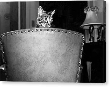 A Cat Peers Over A Chair Canvas Print by Underwood Archives