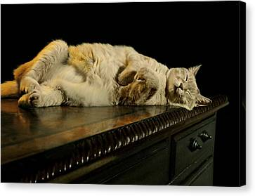 Catnap Canvas Print - A Cat's Life by Diana Angstadt