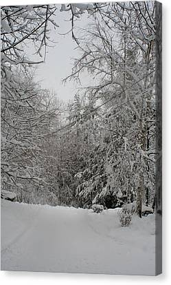 A Chance Of Flurries Canvas Print