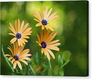 A Cheerful Symphony Canvas Print by Dorothy Lee