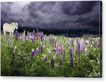 Canvas Print featuring the photograph A Childs Dream Among Lupine by Wayne King