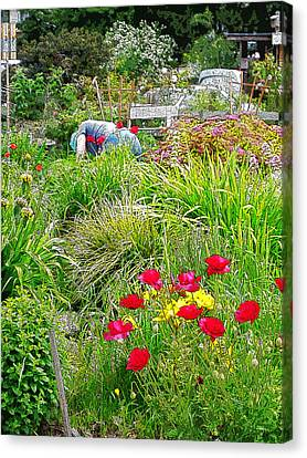 A City Garden Canvas Print by David Trotter
