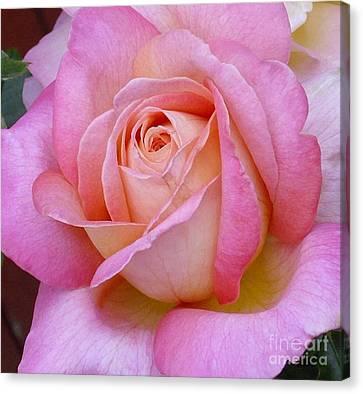 A Classic Rose Canvas Print