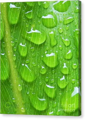 Canvas Print featuring the photograph A Cleansing Morning Rain by Robert ONeil