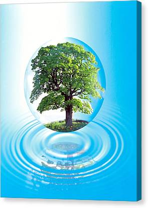 A Clear Sphere With A Full Tree Floats Canvas Print
