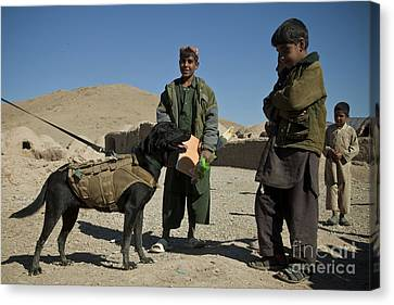 A Coalition Forces Military Working Dog Canvas Print by Stocktrek Images