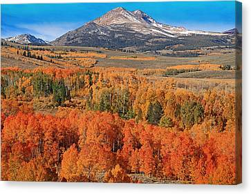 A Colorful Sight Canvas Print by Donna Kennedy