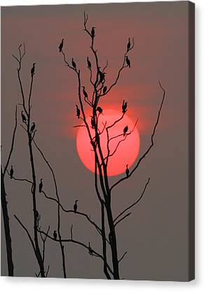 A Cormorant Sunrise Canvas Print