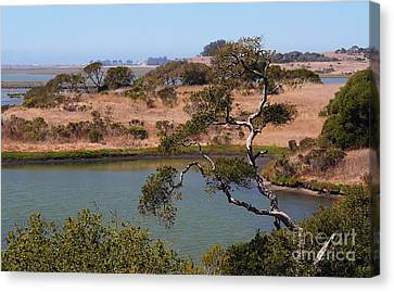 Canvas Print featuring the photograph A Cove In Late Summer At Elkhorn Slough by Susan Wiedmann