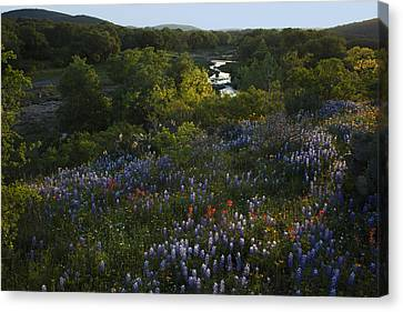 A Creek In Llano County  Canvas Print