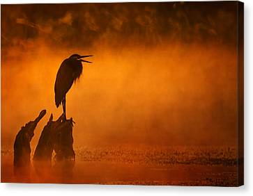 A Cry In The Mist Canvas Print by Robert Charity