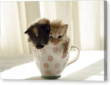 A Cup Of Cuteness Canvas Print by Spikey Mouse Photography