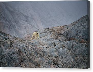 A Curious Polar Bear Approaching A Boat Canvas Print by Andy Mann