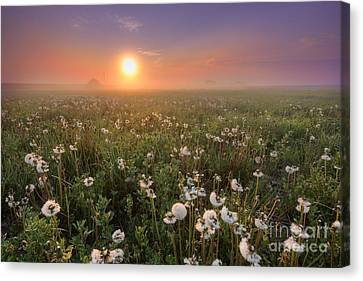 A Dandelion Kind Of Morning Canvas Print