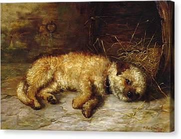 A Dandie Dinmont Canvas Print by Philip Eustace Stretton