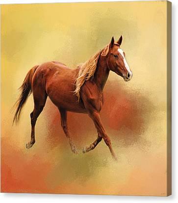 A Dash Of Chestnut Mare Canvas Print by Jai Johnson