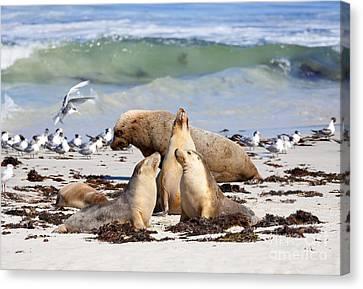 Sea Lions Canvas Print - A Day At The Beach by Mike Dawson