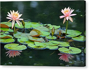 A Day At The Lily Pond II Canvas Print by Suzanne Gaff