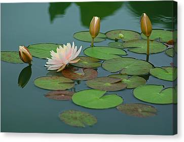 A Day At The Lily Pond Canvas Print by Suzanne Gaff
