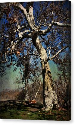 A Day Like This Canvas Print by Laurie Search