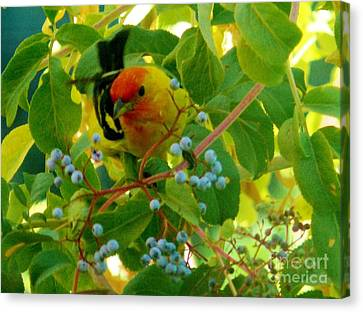 A Day With Mr. Tanager 3 Canvas Print by Jacquelyn Roberts