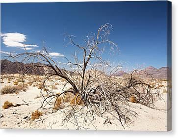 A Dead Bush In The Mojave Desert Canvas Print