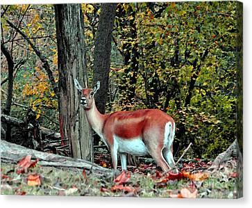 A Deer Look Canvas Print