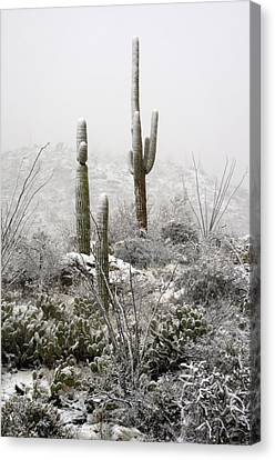 A Desert Snow Day  Canvas Print by Saija  Lehtonen