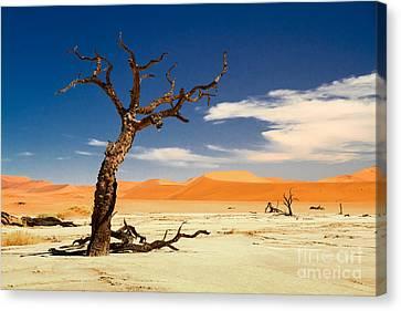 A Desert Story Canvas Print by Juergen Klust