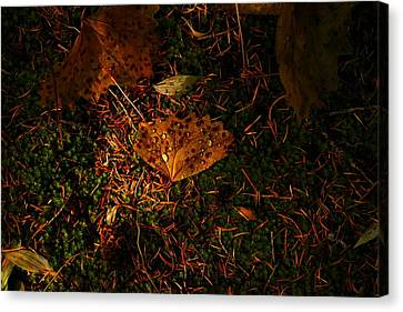 A Dew Covered Death Canvas Print by Jeff Swan
