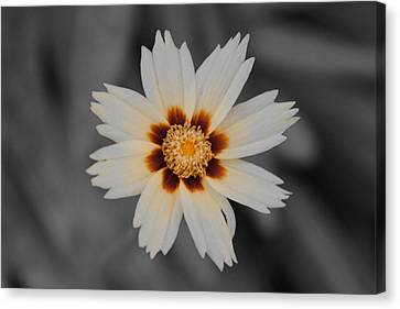 Fleur Canvas Print - A Different Flower by Gloria Pasko