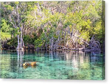 A Dip In The Rainbow Canvas Print by Bob Jackson