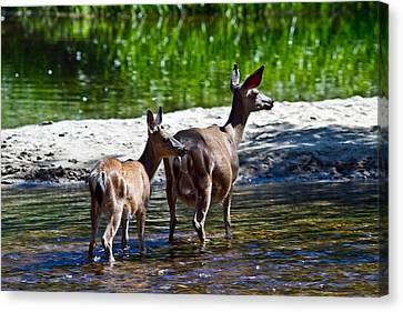 A Doe And Fawn Canvas Print by Brian Williamson