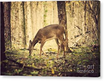 A Doe In The Forest Canvas Print by Lena Auxier