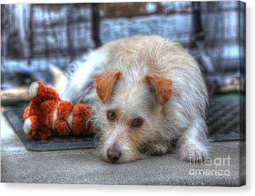 A Dog And His Best Friend Canvas Print by Kevin Ashley