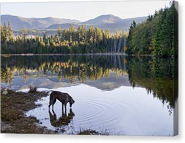 A Dog At The Lake Canvas Print by Peggy Collins