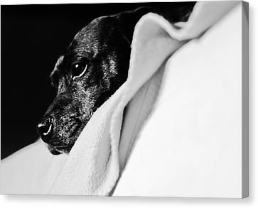 A Dogs Life Canvas Print