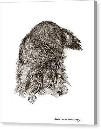 A Dog Named Zorra Canvas Print by Jack Pumphrey