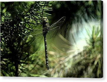 A Dragonfly In The Shade Canvas Print