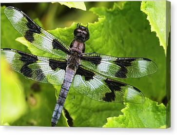 A Dragonfly Warms Up In A Vegetable Canvas Print