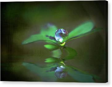 A Dream Of Green Canvas Print by Kym Clarke