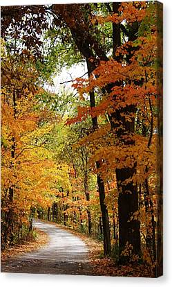 Lowden State Park Canvas Print - A Drive Through The Woods by Bruce Bley