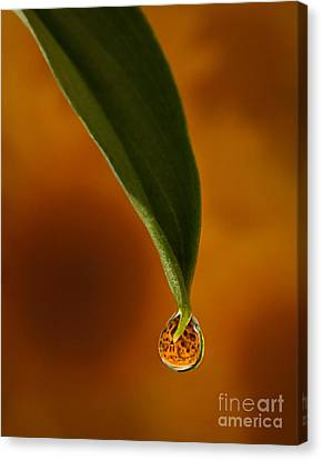 A Drop Of Sunshine Canvas Print by Susan Candelario