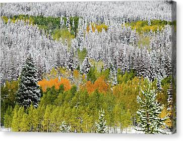 Canvas Print featuring the photograph A Dusting Of Snow by Geraldine Alexander