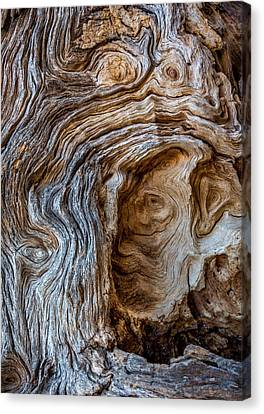 Canvas Print featuring the photograph A Face In The Wood by Beverly Parks