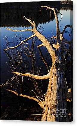 A Fallen Tree Beside A Lake At Sunset Canvas Print by Edward Fielding